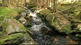 splash park : River runs over boulders in the primeval forest Stock Footage