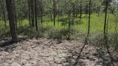 boreal : A typical summer landscape inside the Siberian taiga Stock Footage