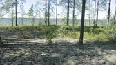 boreal : The wind is waving vegetation on the shore lake Stock Footage
