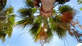 View from the ground on high palm tree at bright sunny day
