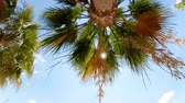 Slow motion footage of palm leaves moving on windy sunny day at beach
