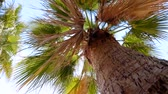 Slow motion video of palm tree aginst blue sky
