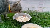 方法 : Extreme slow motion video of cute grey cat licking from bowl on grass 動画素材