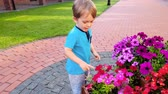 bambini : 4k video of little toddler boy smelling beautiful pink flowers growing in big pots on city street Filmati Stock