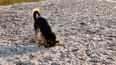 humor : Dog digs hole in sand on the beach