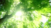 Tree Forest Morning Sun Bright Rays - Camera Rotate 4K