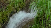 atual : A stormy mountain stream in a bubbling stream among the emerald green grass.