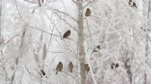 juntar : Birds on a tree over sky at winter day