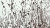 pombo : Birds on a tree over sky at winter day