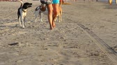 tailândia : dogs walking on the beach Stock Footage