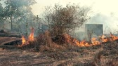 brushwood : Storming and raging big fire in the forest
