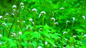 damlacık : Blurred Green Motion Grass nature Background and zoom in and focus point.
