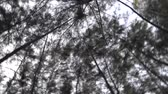 высокий : Looking up into forest, camera rotating fast