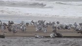 aves marinhas : Flock of seagulls fly over ocean and beach in daytime.