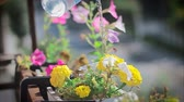 manmetro : girl watering yellow flowers HD Stock Footage