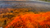 clorofila : Colorful Layers of microorganisms in the yellowstone geyser. Vídeos
