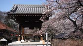 Temple Bell and Cherry Blossoms Swaying in the Wind