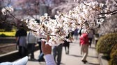 People Enjoying Hanami on a Lovely Spring Day Wideo