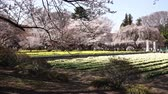 Beautiful Japanese Garden in Spring