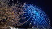 Cherry Blossoms with a Ferris Wheel at Night