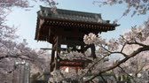 Cherry Blossoms and Bell at a Temple