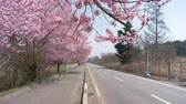 Car Driving on the Country Road in Japan in Spring