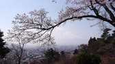 taşra : Mt. Fuji over Cherry Blossoms and the City of Fujiyoshida