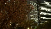 Япония : Cherry Blossoms Swaying in the Wind at Night in Tokyo Стоковые видеозаписи