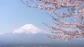 provincial : Mt. Fuji over Cherry Blossoms Swaying in the Wind