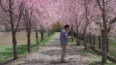viale alberato : Japanese Man Taking a Photo of Cherry Blossoms with His Smartphone