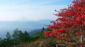 virágzik : Red Azalea Blossoms Swaying in the Wind with Mt. Fuji over the Kofu Basin in the Background Stock mozgókép