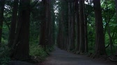アプローチ : Tourists Walking Up An Avenue of Cedars in a Forest in Togakushi, Nagano Pref., Japan (Time lapse)