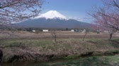 Япония : Mt. Fuji over Cherry Blossoms and a Stream (real timeloop) Стоковые видеозаписи