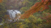 chovendo : Scenic Waterfall in Autumn (Slow Motion)