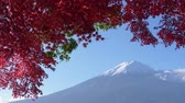 gałązka : Mt. Fuji with Red Maple Leaves Wideo