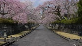em linha : Country Road with Cherry Blossoms Stock Footage