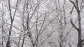 coberto : Snowing in a Forest (Super Slow Motion)