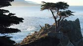 falésias : Early Morning at the Lone Cypress