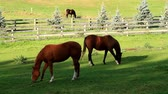 wyscigi : Beautiful Thoroughbred horses eating fresh green grass