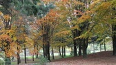 vibrante : Autumn trees at the park