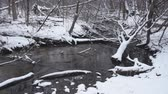fúria : Trout stream running through a snow covered woodland in winter.