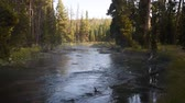 Upstream view of the Gibbon River in Yellowstone National park as bright sunlight begins to shine in from the gaps in the trees.  The stream flows swiftly through a Lodgepole pine forest. Dostupné videozáznamy