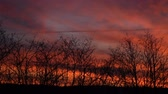 Red and orange clouds in the colorful sky at sunset silhouette alder shrubs. Dostupné videozáznamy