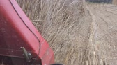 Invasive Cattails Typha spp. are cut and harvested by machinery in a marsh wetland to improve wildlife habitat. Dostupné videozáznamy