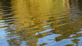 A quite reflection in the water forms and abstract seed of yellow green trees and ripples.