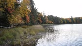 vegetação : A small lake in northern Wisconsin is surrounded with trees and other plants in their fall colors. Vídeos