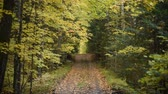 A dirt road track cuts straight through a forest with leaves changing color in fall. Dostupné videozáznamy