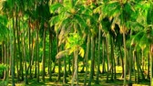 windy : Exotic palm forest illuminated by bright sun. Tropical trees with thick green foliage and straight trunks sway in the wind. Summer landscape with jungles in windy day. Long shot, camera stays still.