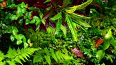 mysterious : Rainy season in tropics. Zooming video of amazing plants and flowers in fantasy garden wet after rain