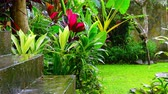 mysterious : Wet season in tropics. Amazing plants and flowers in fantasy garden. Heavy rain original audio Stock Footage